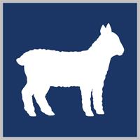 joma-wool