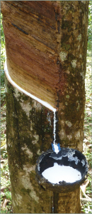 Latex Sap