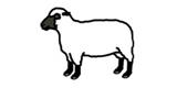wool-2-a