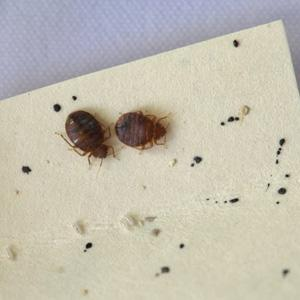 Quot Don T Let The Bedbugs Bite Quot Beds Blog